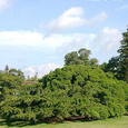 Royal Botanical